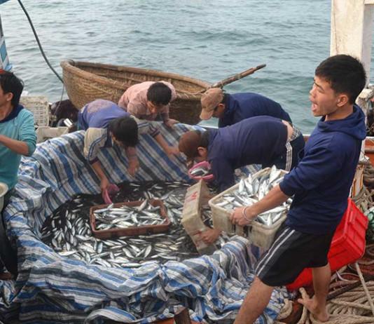 Ngư dân vui vì được mùa cá nục