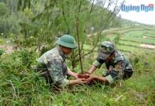 Những người lính góp phần làm cho Lý Sơn ngày một thêm xanh.