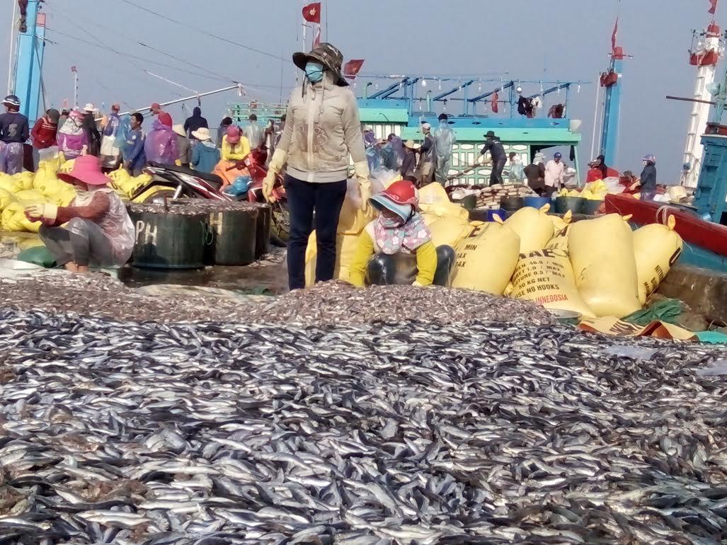Hàng trăm tấn cá nục của ngư dân khai thác được đổ tràn trên cảng vì không tiêu thụ được.