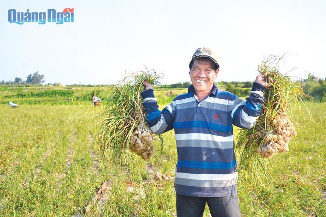 Sản xuất tỏi đem lại nguồn thu nhập cao cho người dân Lý Sơn.
