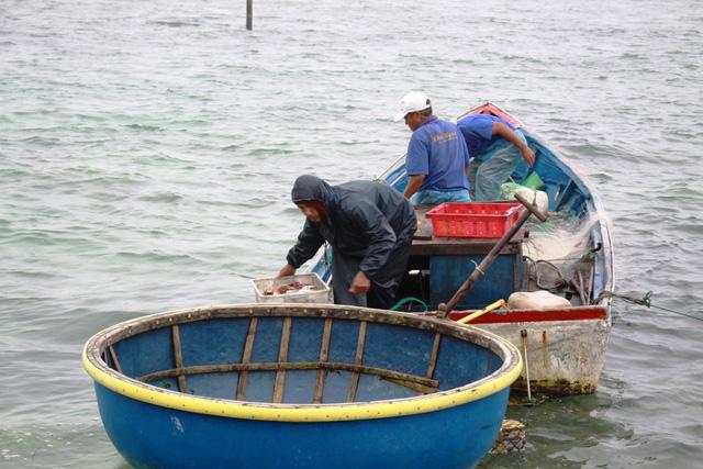 700 ngư dân Lý Sơn trước nay mưu sinh bằng nghề đánh bắt hải sản gần bờ đang cần được chuyển đổi sinh kế