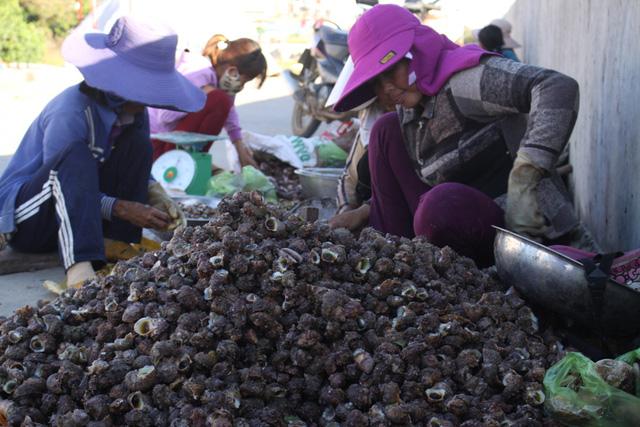 Nhiều lao động sẽ mất việc làm khi hoạt động đánh bắt ven bờ bị cấm.