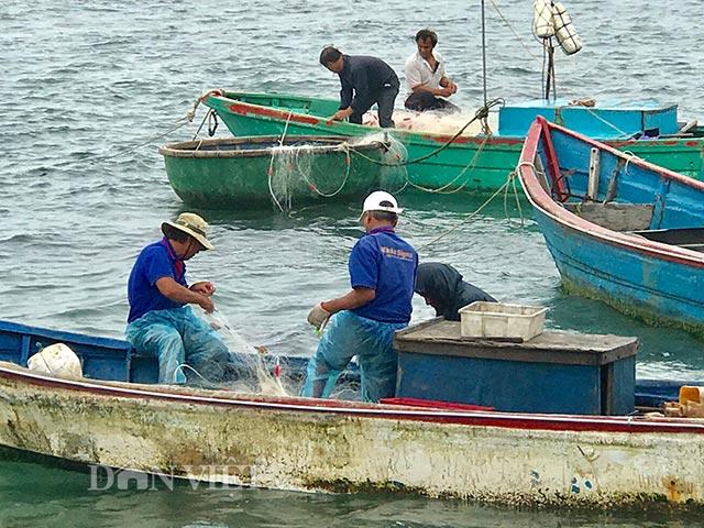 Gỡ cá dính lưới
