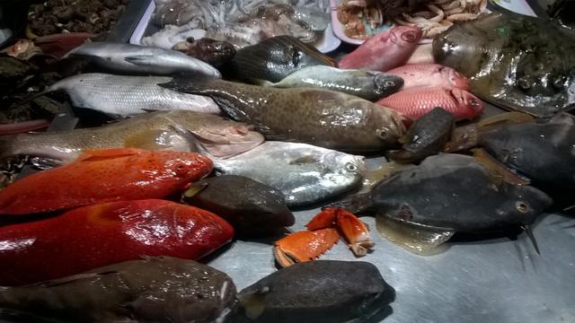 Phần lớn hải sản tại chợ đêm Lý Sơn được đánh bắt gần bờ nên rất tươi ngon.