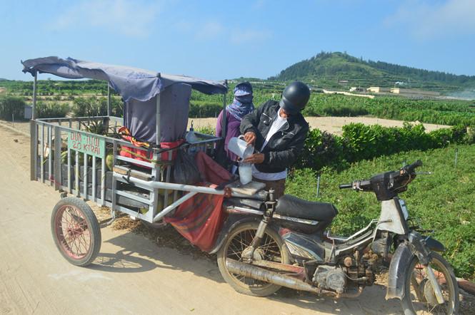 """""""Quán nước dừa di động"""" của anh Toàn luôn rong ruổi trên những cánh đồng trên đảo Lý Sơn"""