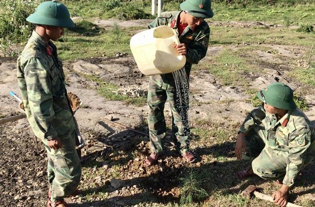 Tưới nước cho cây vừa trồng.
