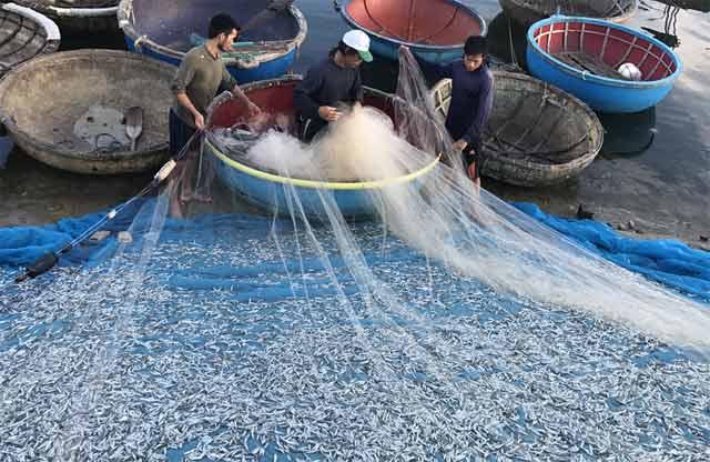 Ngư dân đang rũ lưới thu cá sau chuyến ra khơi