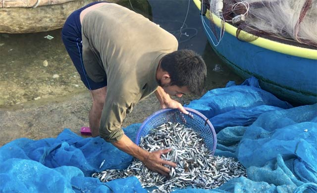 Chuẩn đị đưa cá cơm quế đánh được đi bán