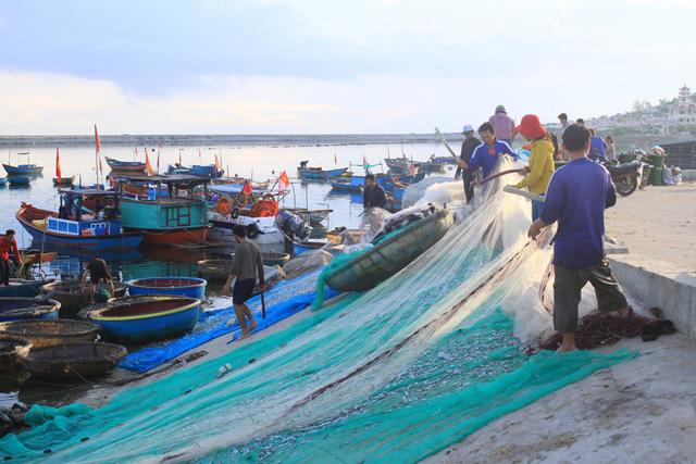 Mùa giũ cá cơm trên đảo Lý Sơn bắt đầu từ tháng 5 đến tháng 7 hàng năm.