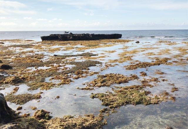 Một bãi đá ngầm tại thôn Đông, xã An Hải, huyện Lý Sơn.
