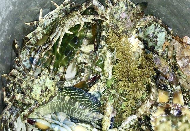 """Các loại hải sản bắt được từ đi """"săn"""" đêm vô cùng phong phú, với đủ loại cua, cá..."""