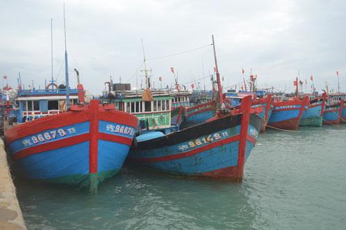 Đang vào mùa đánh bắt nhưng nhiều tàu cá của ngư dân Lý Sơn vẫn nằm bờ vì giá cá giảm