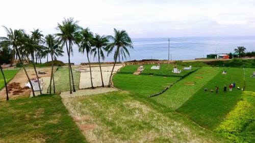 Những cánh đồng trồng hành, tỏi sát biển tại Lý Sơn.