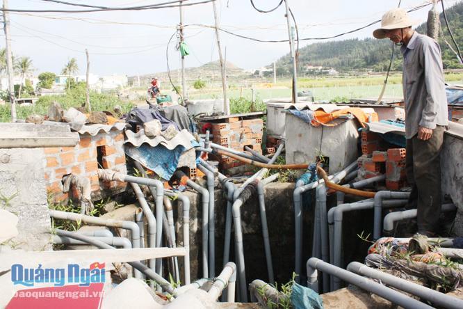 Nguồn nước từ giếng Rừng, ở thôn Tây, xã An Vĩnh (Lý Sơn) đã mang lại màu xanh cho nhiều thửa ruộng giữa mùa khô hạn.