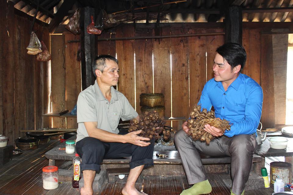 Cây tỏi tía đã được trồng ở Noong Luông từ nhiều năm nay.
