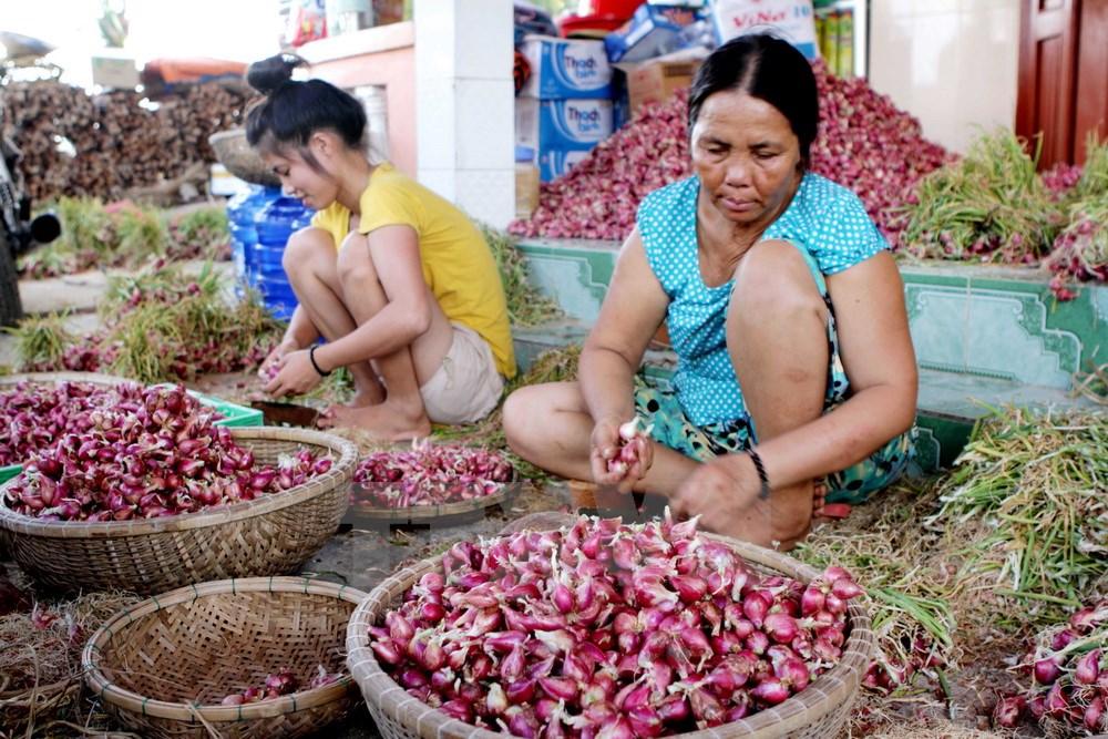 Nông dân Lý Sơn phân loại hành sau khi thu hoạch. Ảnh: Phương Hoa/TTXVN