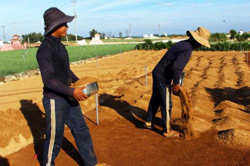 Làm đất - công đoạn khó nhọc và công phu của nghề trồng hành tỏi Lý Sơn.