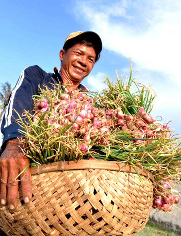 Nông dân đảo Lý Sơn vui vì mùa hành tím đạt năng suất cao.