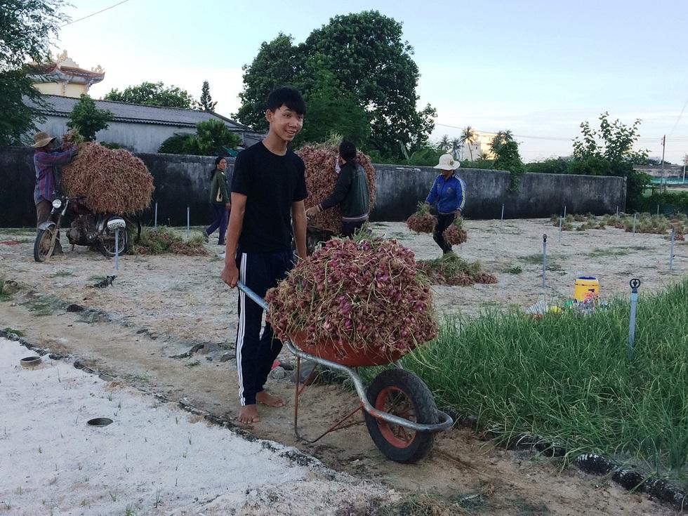 Nguồn cát trắng khan hiếm làm cho chi phí tăng cao, ảnh hưởng không nhỏ đến việc trồng hành tỏi của người dân