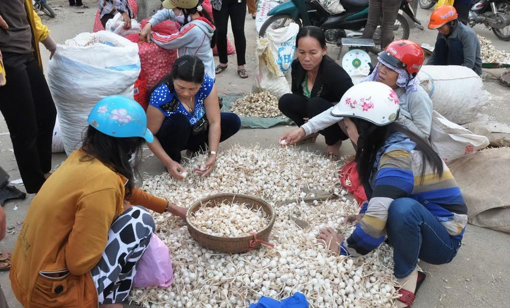 Tỏi Lý Sơn được bán tại chợ huyện này