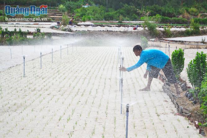 Mô hình tưới péc phun mưa cho cây hành, tỏi mà Chương trình bãi ngang ven biển hỗ trợ, được người dân Lý Sơn đồng tình hưởng ứng.