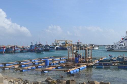 Người dân nuôi trồng thủy sản Lý Sơn sửa chữa đóng mới lồng bè để khôi phục sản xuất