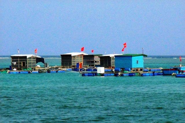 Các bè nuôi thủy sản ở Lý Sơn.