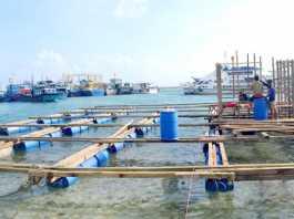 Các hộ nuôi trồng thủy sản Lý Sơn đóng mới lồng bè cho vụ nuôi trồng mới.