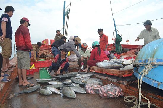 Ngư dân Lý Sơn cân cá bán cho thương lái.