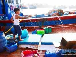 Chủ tàu Huỳnh Thanh, ở thôn Tây, xã An Hải (Lý Sơn) dù bị thuyền viên quỵt tiền và thiếu lao động, nhưng vẫn phải cho tàu ra khơi.