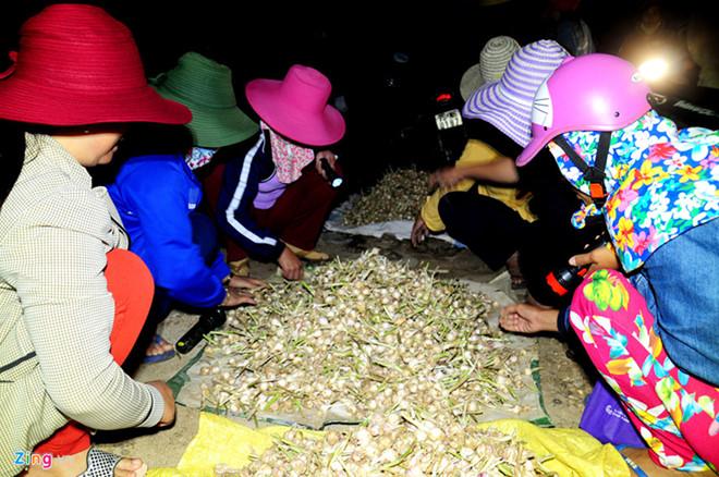 Phiên chợ tỏi Lý Sơn.