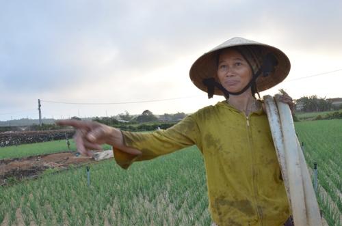 Nông dân trồng hành tím ở xã Bình Hải lo không có việc làm khi FLC làm sân golf. Ảnh: Phạm Linh.