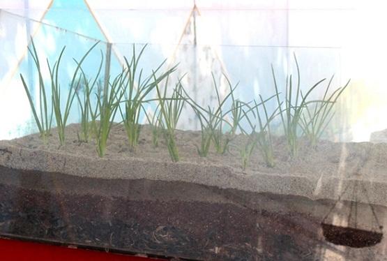 Triển lãm cũng giới thiệu cho du khách về quy trình xử lý đất và cách trồng tỏi truyền thống của người dân Lý Sơn. Thông qua mô hình này, du khách sẽ hiểu rõ hơn về sự vất vả của nghề trồng hành, tỏi ở Lý Sơn