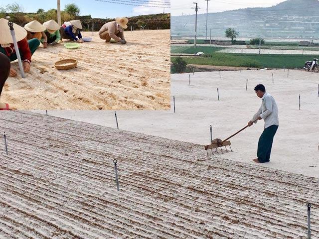 Dụng cụ cào tạo luống để trồng hành, tỏi.