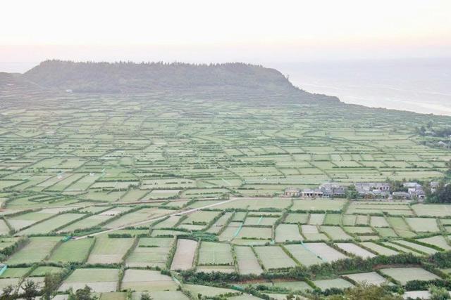 Một góc cánh đồng trồng hành, tỏi ở Lý Sơn.