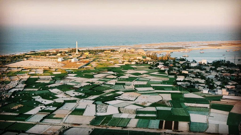 Cánh đồng trồng tỏi tại huyện đảo Lý Sơn.