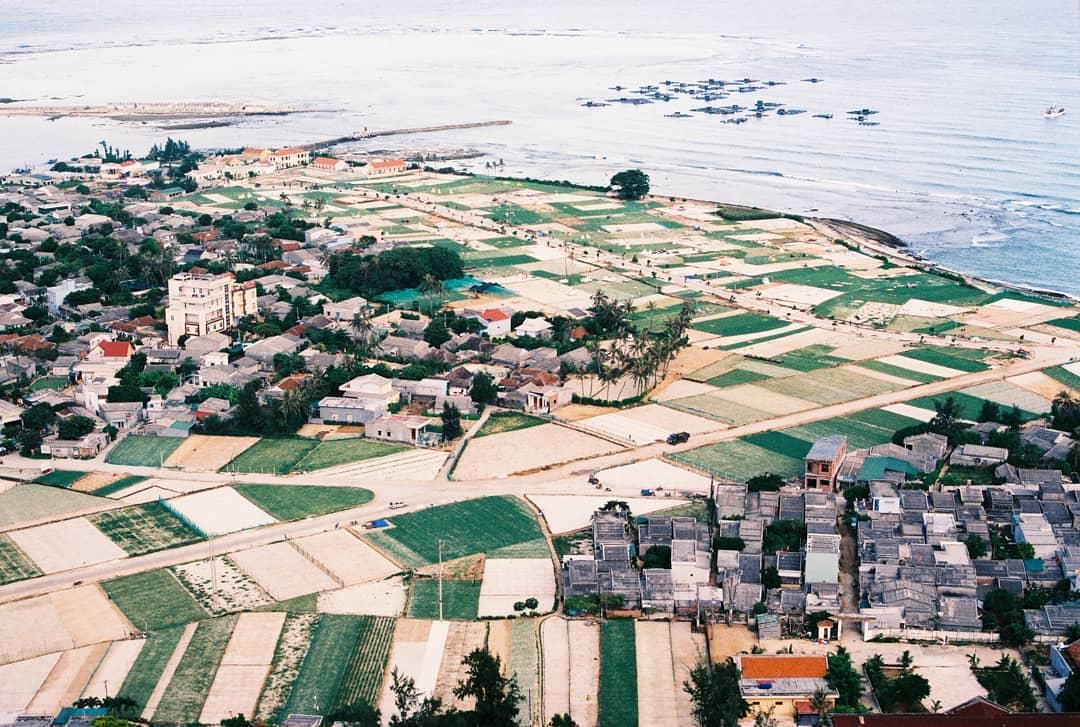 Rộng tỏi đảo Lý Sơn