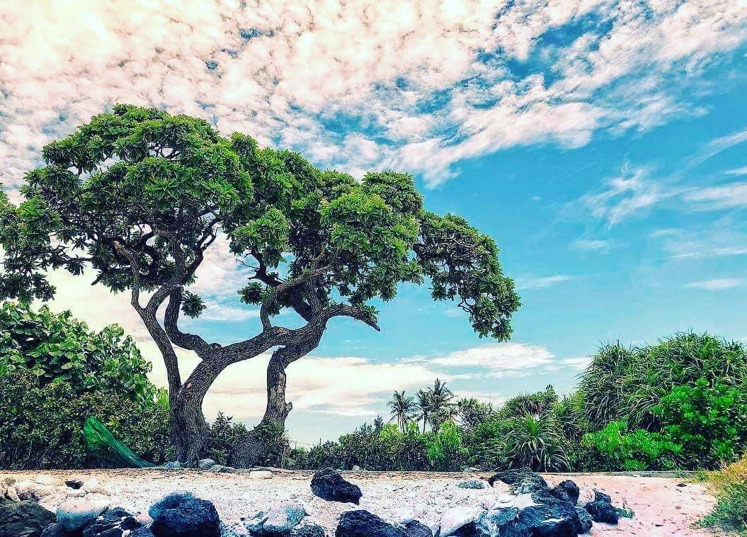 cây phong ba