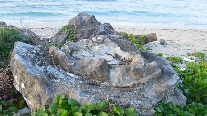 Những khối san hô hóa thạch trên đảo Lý Sơn