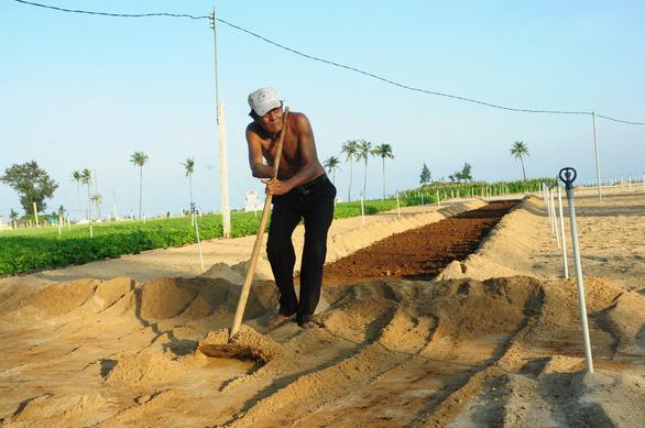 Hiện người dân Lý Sơn vẫn canh tác tỏi theo cách thức địa phương, chưa có vùng chuyên canh trồng tỏi nào ở đảo như Công ty I AM V nói