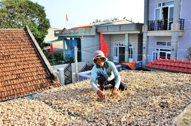 Huyện đảo Lý Sơn còn tồn đọng 1.500 tấn tỏi khô