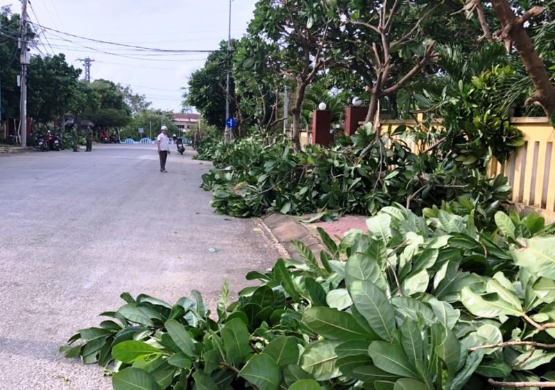 Chính quyền đảo Lý Sơn tỉa cây để chống bão.