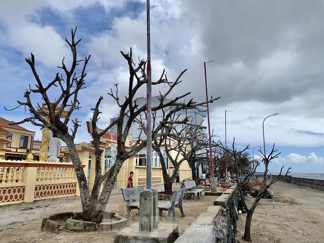 'Có thể 5-10 năm nữa cây xanh trên huyện đảo này mới trở lại được như trước khi bão chưa tàn phá', ông Đặng Tấn Thành, Phó chủ tịch UBND huyện khẳng định.