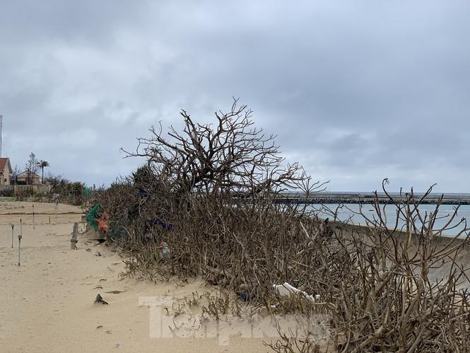 Theo một số bậc cao niên trên đảo, khi bão số 9 đổ bộ vào thời tiết lúc đó không có mưa, nhưng với sức gió khủng khiếp, gió mạnh cuốn theo nước biển thổi khắp quanh đảo khiến cây cối trên đảo bị nhiễm nước mặn mà rụng lá, chết khô như vậy.