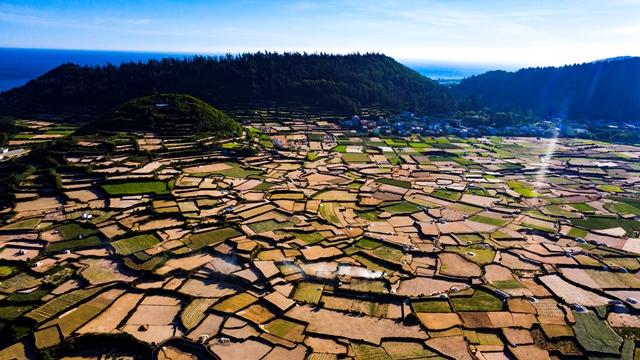 Chính quyền huyện Lý Sơn khuyến cáo người dân ngừng xuống giống vụ tỏi Đông Xuân trước bão 13