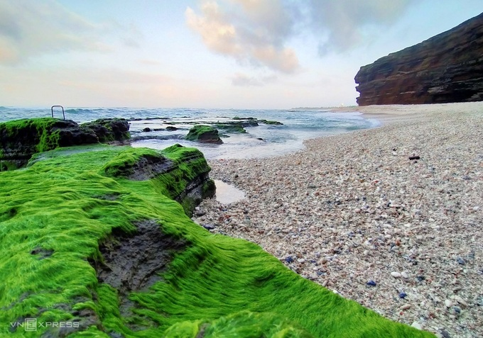 Đảo Lý Sơn đang đến mùa rêu tuyệt đẹp nhưng lại không có du khách.