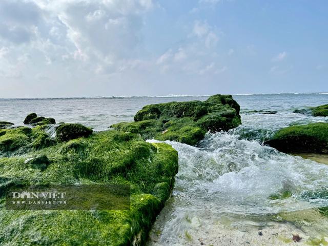 Thảm rêu tuyệt đẹp làm mê hoặc lòng người tại đảo Lý Sơn, sẽ là địa điểm cho bạn check in trong chuyến đi du lịch sau Tết.