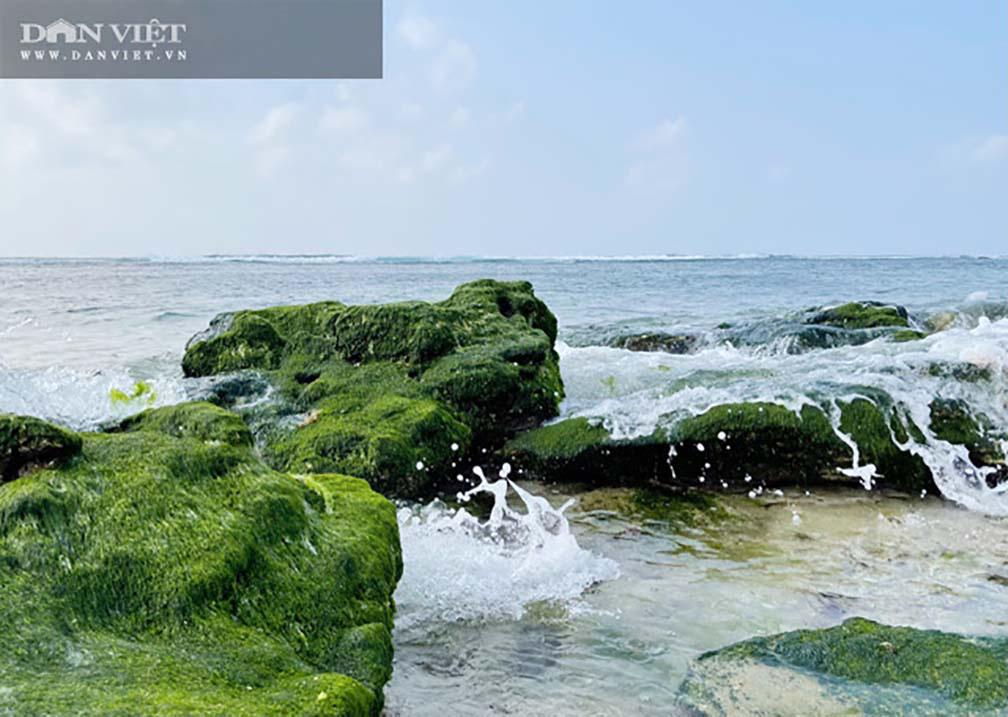 Rêu xanh lẩn khuất giữa làn nước biển trong veo, tạo nên bức tranh làng chài thanh bình ở đảo Lý Sơn.