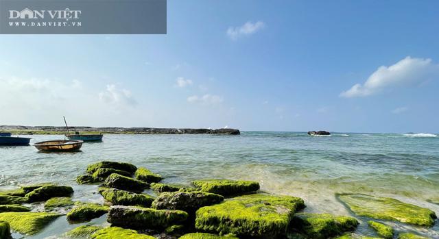 Nhiều người dân đất đảo cho biết, rêu mọc dày và đẹp nhất là từ tháng giêng và kéo dài đến tháng 3 âm lịch hàng năm.