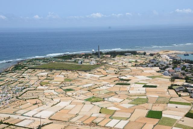 Huyện đảo Lý Sơn có khoảng 330 ha đất trồng hành, tỏi.